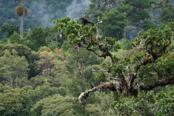TEPhoto-Landings-Cloudforest Trout-3
