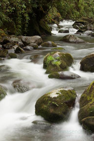 TEPhoto-Landings-Cloudforest Trout-4