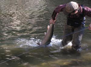 Big Fish, Small Stick-10